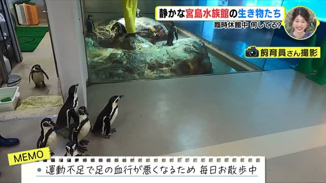 静かな宮島水族館の生き物たち 臨時休館中、何してる?